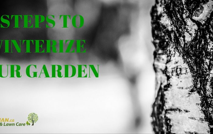 7 STEPS TO WINTERIZE YOUR GARDEN