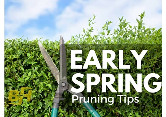 early spring lawn care tips - 559×396