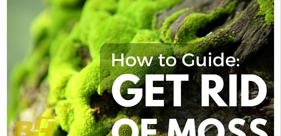How to get rid of moss