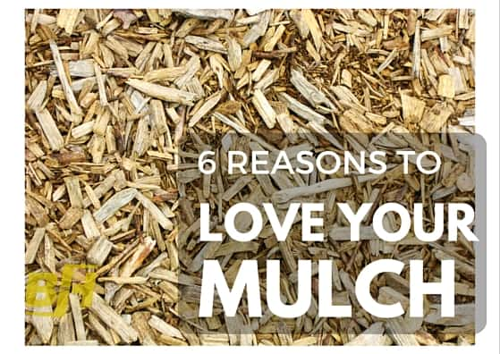 6 reasons to love your mulch