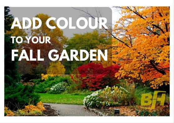 BUR-HAN - Add Colour to Your Fall Garden (2)