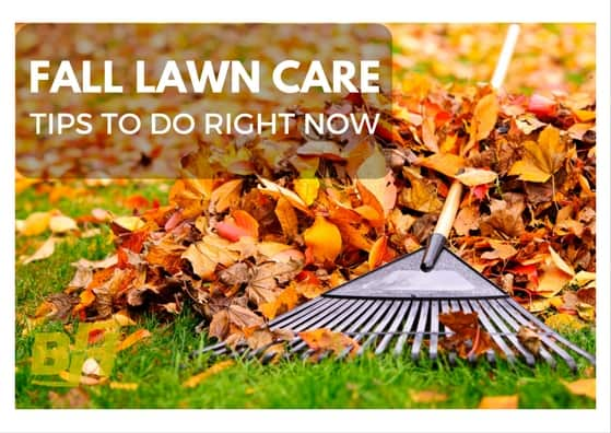 5 fall lawn care tips to do right now bur han garden lawn care - Autumn lawn care advice ...