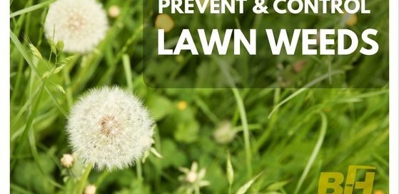 how to prevent and control weeds
