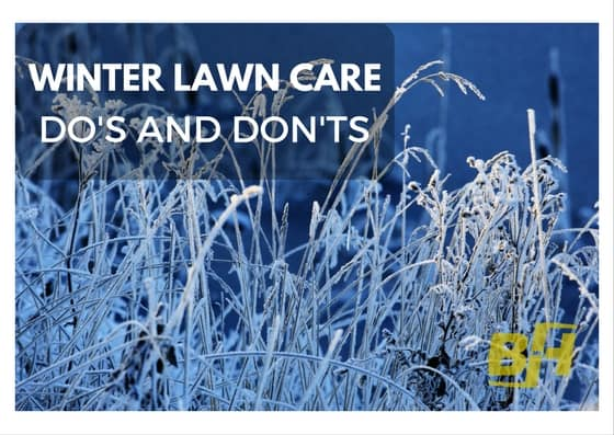 winter lawn care - bur-han