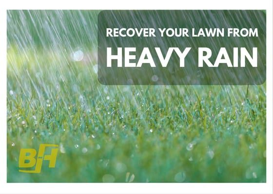BUR-HAN - Recover Your Lawn from Heavy Rainfall
