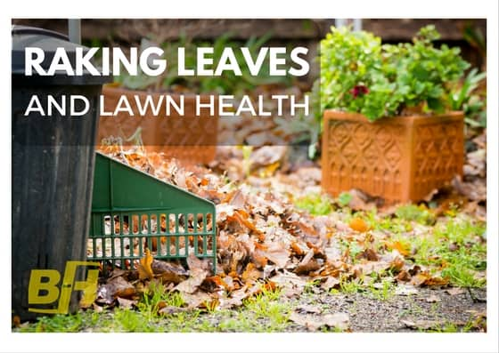 Bur-Han - raking leaves and lawn health