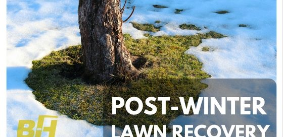 BUR-HAN - Post Winter Lawn Recovery