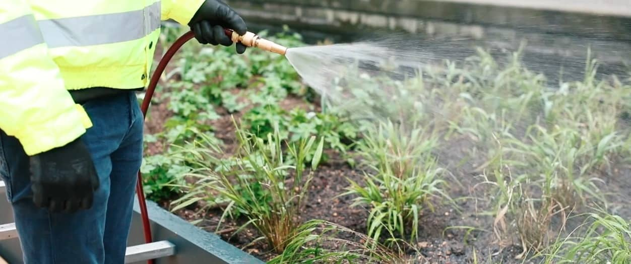 commercial landscapers using a sprinkler