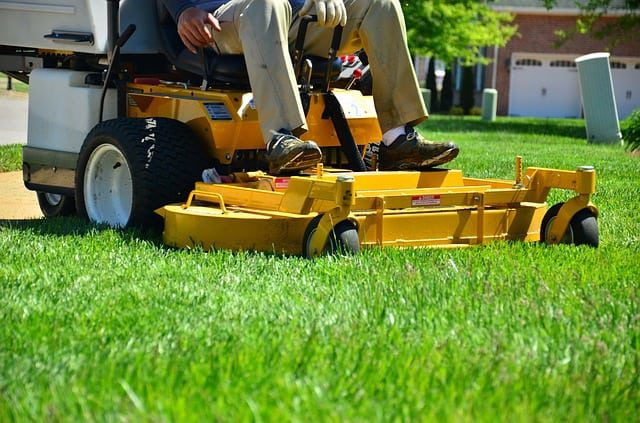 homeowner following a lawn care schedule